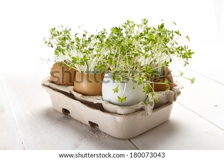 Spring idea - watercress grown in the eggshell - stock photo
