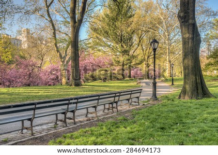Spring in Central Park, New York City with Japanese cherry trees - stock photo