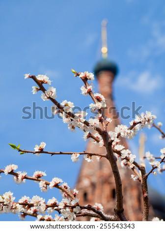 Spring in Church garden - stock photo