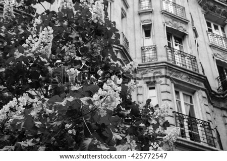 Spring in Paris. Blossoming Chestnut tree and typical Parisian building. Aged photo. Black and white. - stock photo
