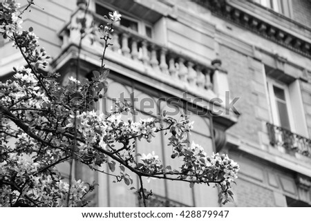 Spring in Paris. Blossoming Sakura tree and typical Parisian building. Aged photo. Black and white. - stock photo