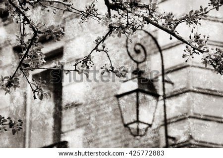 Spring in Paris. Blossoming Sakura tree and typical Parisian building. Retro aged photo with scratches. Black and white. - stock photo