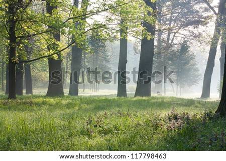Spring in the old park. Misty Morning nature - stock photo