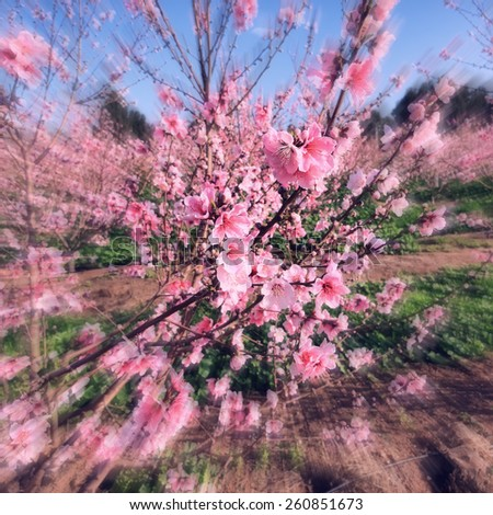 Spring is coming. Blossoming spring orchard (garden) landscape. Springtime - pink blooming orchard. Motion blur and toned effect, selective focus (at a branch) - stock photo