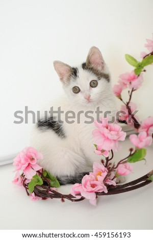 Spring kitten - stock photo