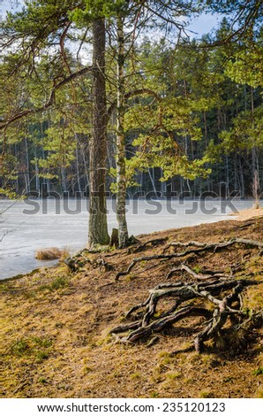 Spring landscape at wood lake - stock photo