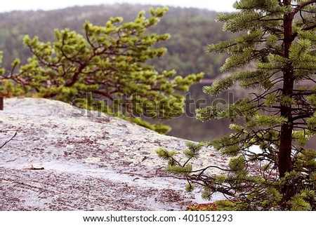 Spring landscape in the forest mist sun - stock photo