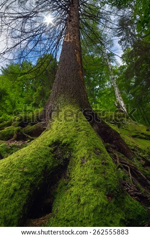 Spring landscape. Moss on the tree. Beauty in nature. Fairy Tale Forest - stock photo
