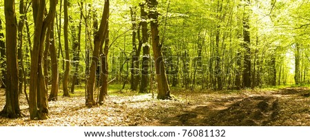spring landscape of young grey forest with green trees - stock photo