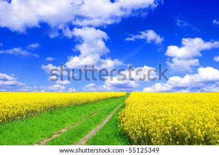 Spring landscape. Picture of oilseed rapeseed on field and blue sky. - stock photo