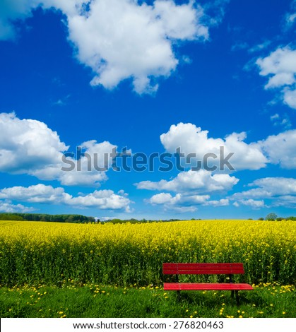 Spring landscape with blooming canola field and red bench  - stock photo