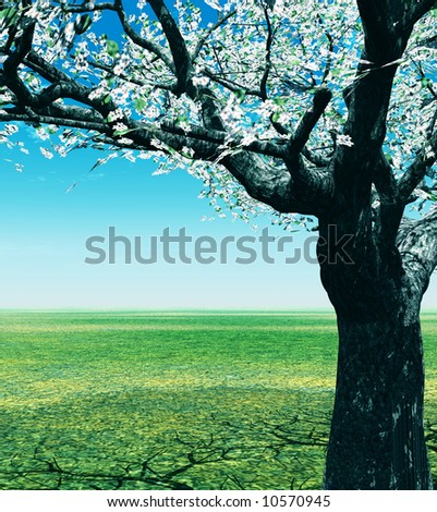 Spring landscape with blossoming cherry-tree - stock photo