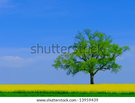 Spring landscape with lonely tree and yellow rapeseed fields - stock photo