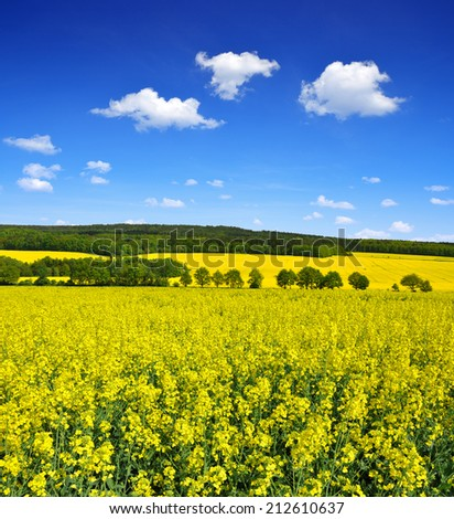 Spring landscape with rapeseed field  - stock photo