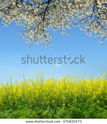 Spring landscape with rapeseed field and flowering tree. - stock photo