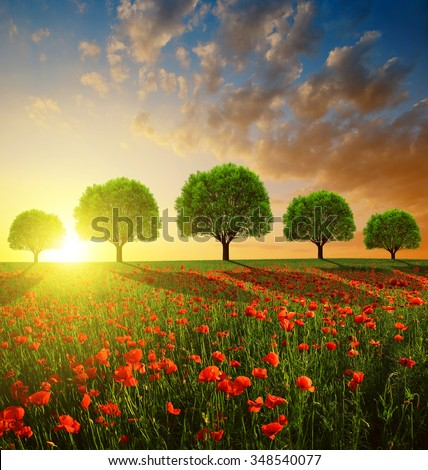 Spring landscape with red poppy field and trees in the sunset - stock photo