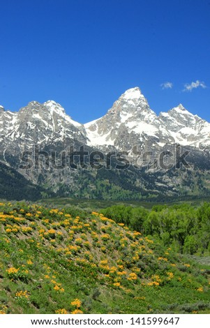 Spring landscape with the Grand Teton in the background, Wyoming, USA. - stock photo