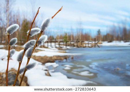 Spring landscape with willow branches - stock photo