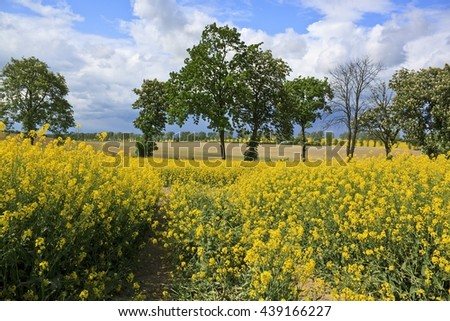 Spring landscape with yellow rape field - stock photo