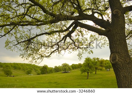 spring landscape with young forest in a cloudy day - stock photo