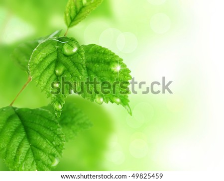 Spring leaves - stock photo