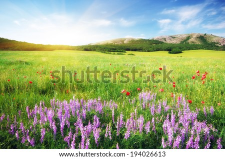 Spring meadow in meadow. Beautiful landscapes. - stock photo