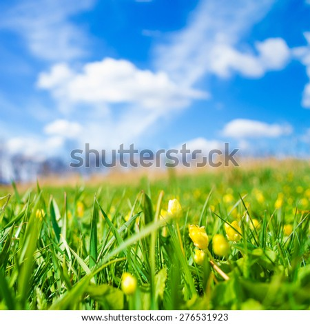 Spring meadow on bright sunny day - stock photo