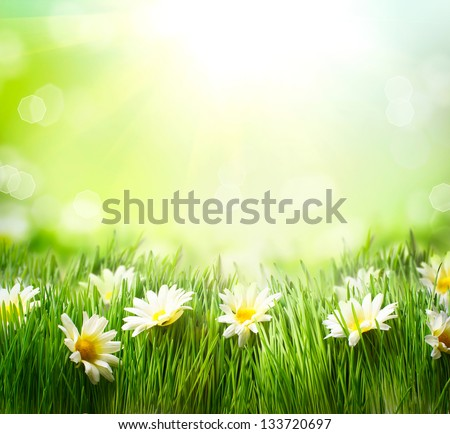 Spring Meadow with Daisies. Grass and Flowers border art Design. Nature. Environment concept. Green Nature Background - stock photo