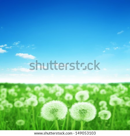 Spring meadow with dandelions under blue sky. - stock photo