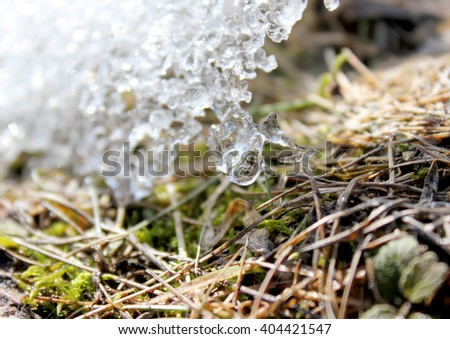 Spring melting ice on the ground. Grass sprouts under the melting ice. Earth day. - stock photo