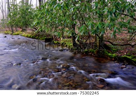 Spring, Middle Fork of Williams River, Monongahela National Forest, West Virginia, USA - stock photo