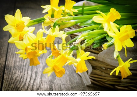 Spring narcissus in a rustic wicker basket - stock photo