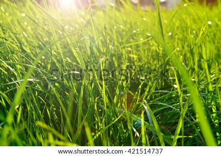 Spring natural background - closeup of fresh bright green grass on the lawn lit by shining sunbeams. Landscape background, lowest point of shooting. - stock photo
