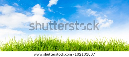 Spring nature background with grass and blue sky in the back  , Summer time - stock photo