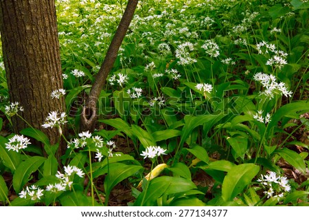 Spring Nature. Beautiful Landscape. Forest with Green Grass. - stock photo