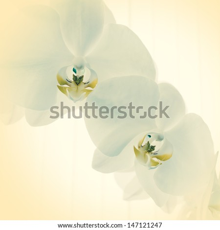 spring orchid flower - stock photo