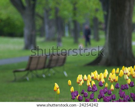 Spring park, tulips in foreground, a man walking a dog in background - stock photo