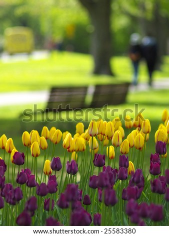 Spring park, tulips in foreground, two girls walking in background - stock photo
