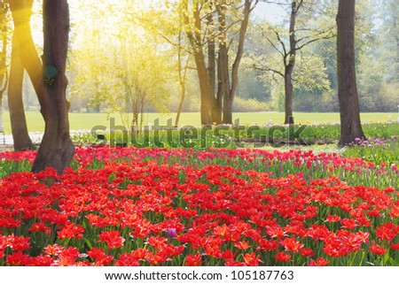 Spring park with red tulips - stock photo