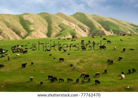 Spring pasture - stock photo
