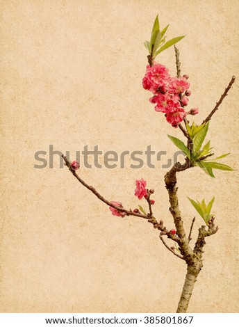 Spring peach blossom on Old antique vintage paper background - stock photo