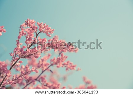 Spring pink blossom and bee in nature. - stock photo