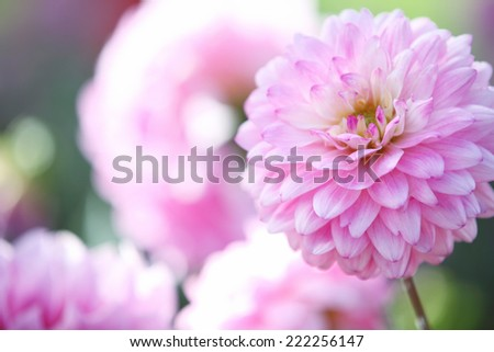 Spring pink flower  - stock photo