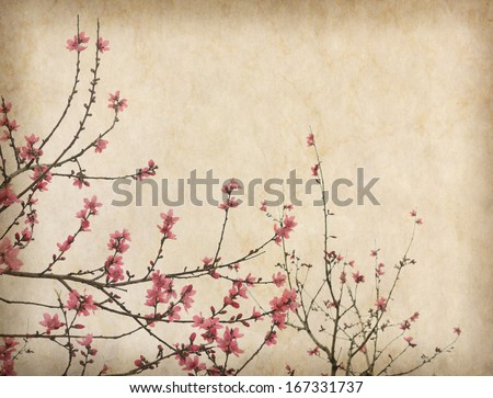 Spring plum blossom blossom on Old antique vintage paper background - stock photo