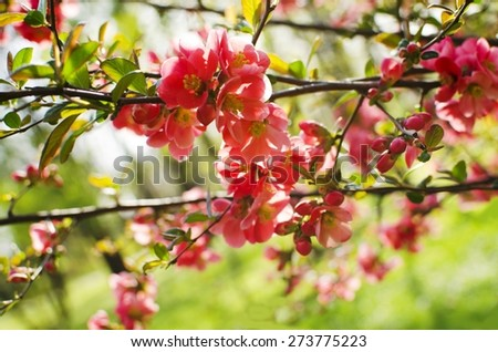 Spring red blooming flowers � soft background - stock photo