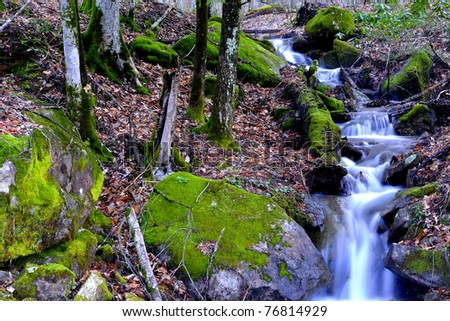 Spring, Rhododendron and stream, Monongahela National Forest, West Virginia, USA - stock photo