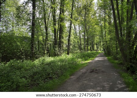 Spring scene - the way in the park with green trees - stock photo