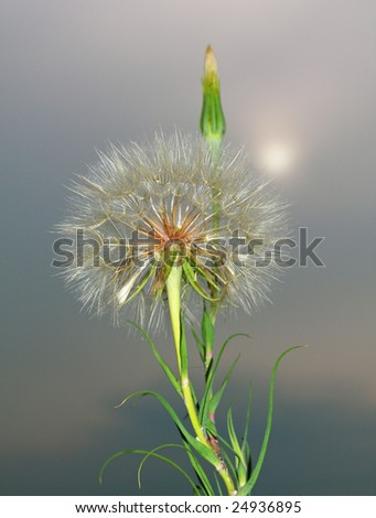 Spring sign - stock photo