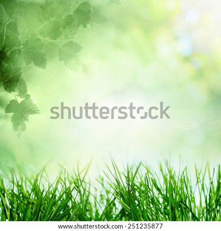 Spring sky with sunny field with growing grass and tree branch in forest - stock photo