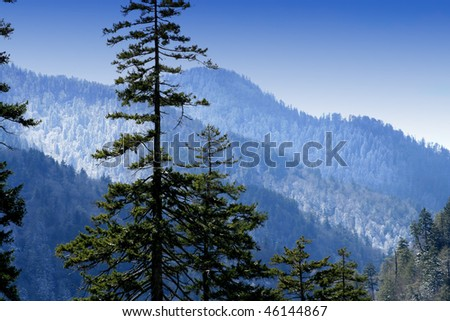 Spring snow in Newfound Gap. Great Smoky Mountains National Park. - stock photo